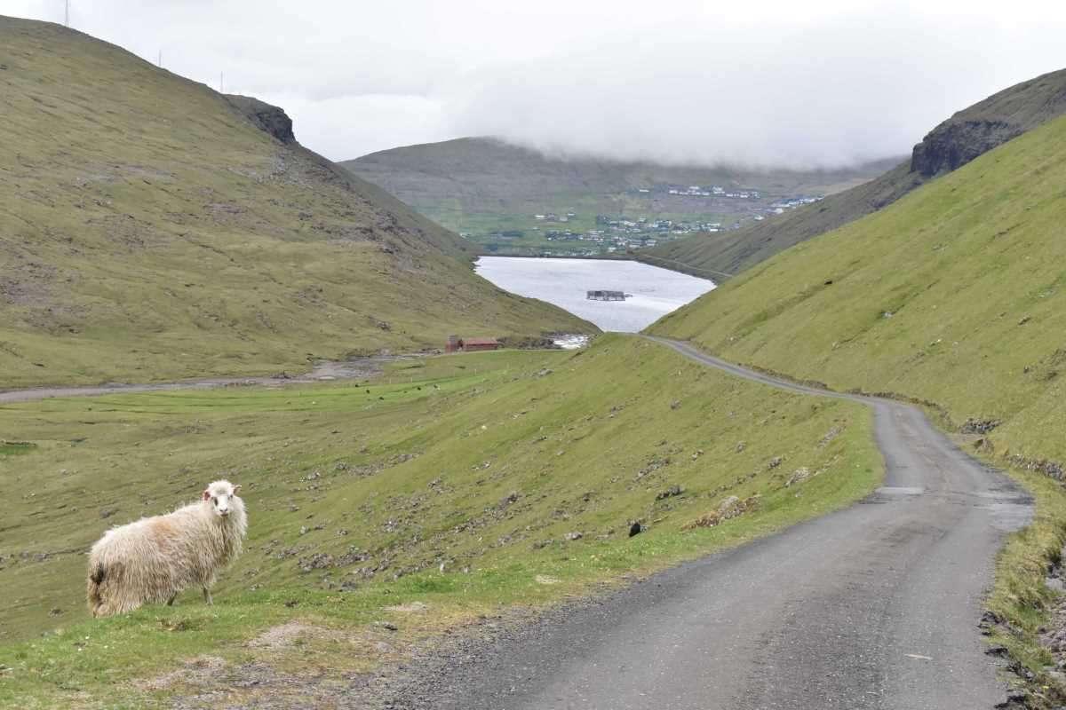 Isole Faroe sopra Vestmanna