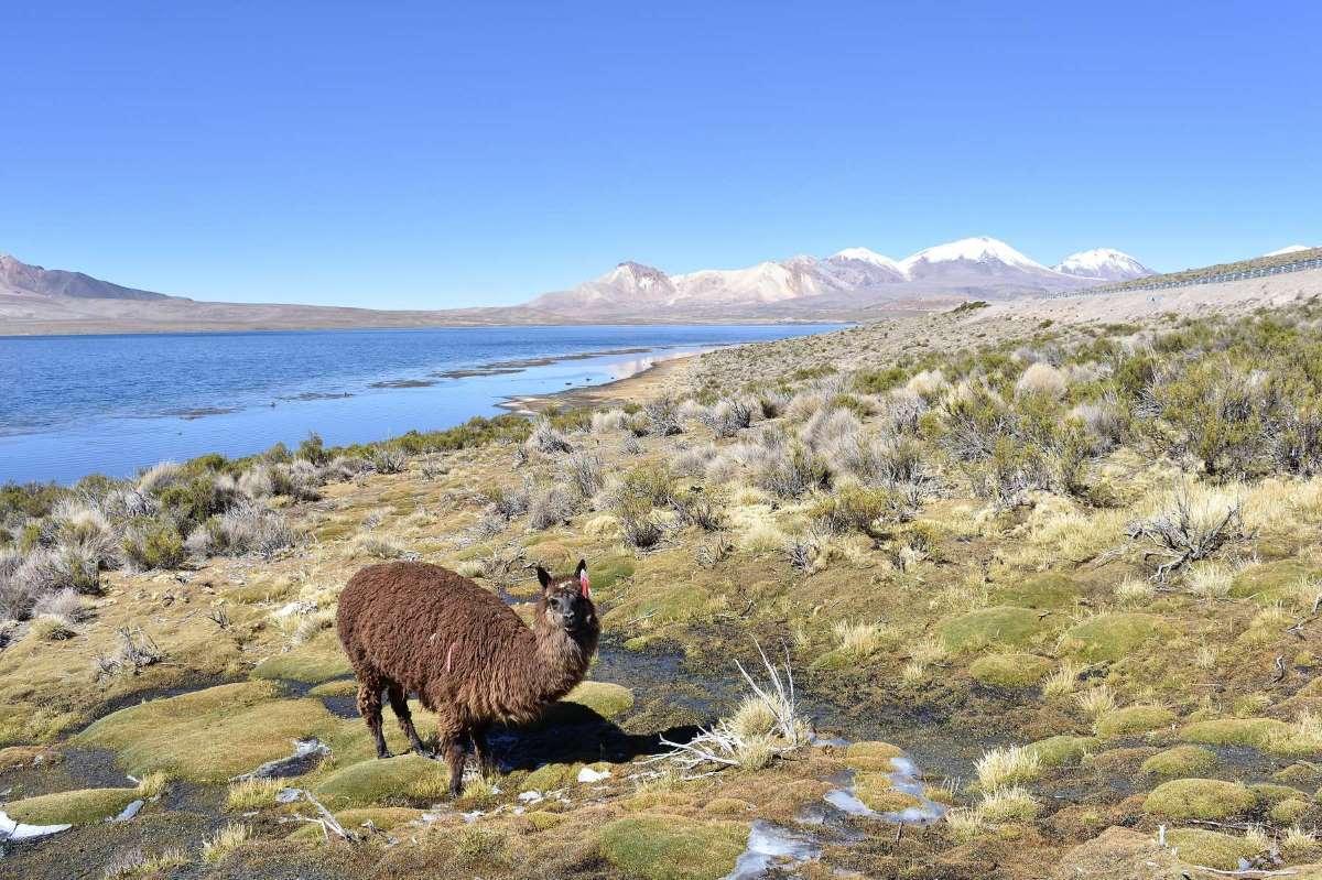 Viaggio in Cile Arica