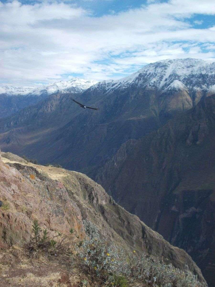 Viaggio in Peru condor