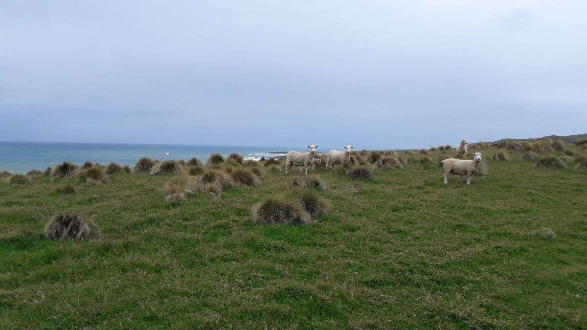 In bici nelle Catlins panorama