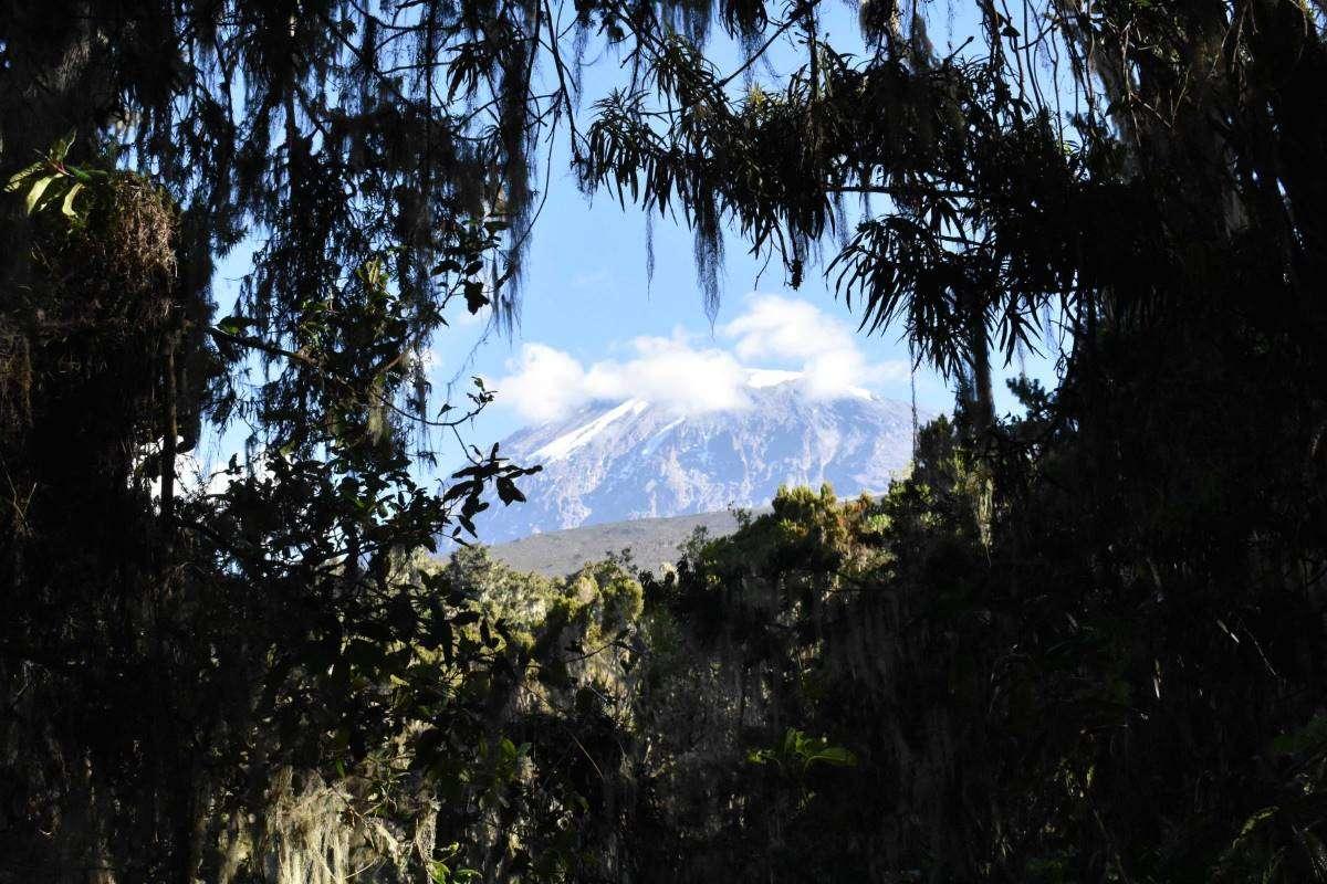 Ultima vista sul Kilimanjaro