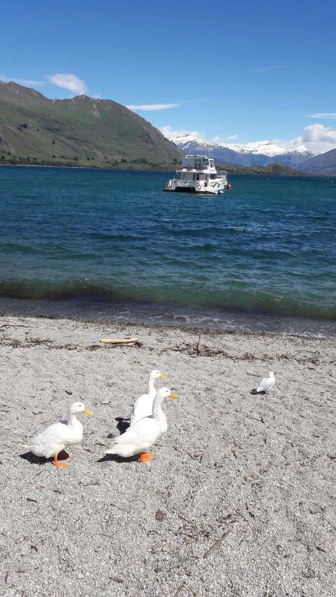 VIaggio in Nuova Zelanda Wanaka