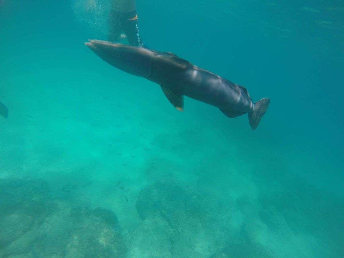 Viaggio alle Galapagos Santa Cruz