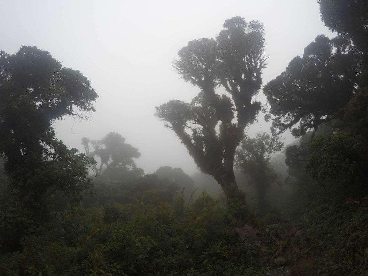 Viaggio in Ecuador Parque Podocarpus