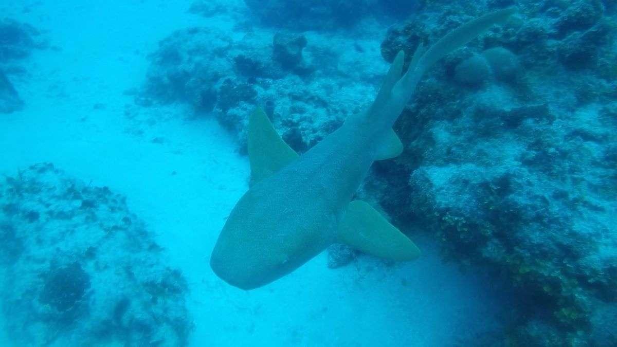 Viaggio in Messico squalo