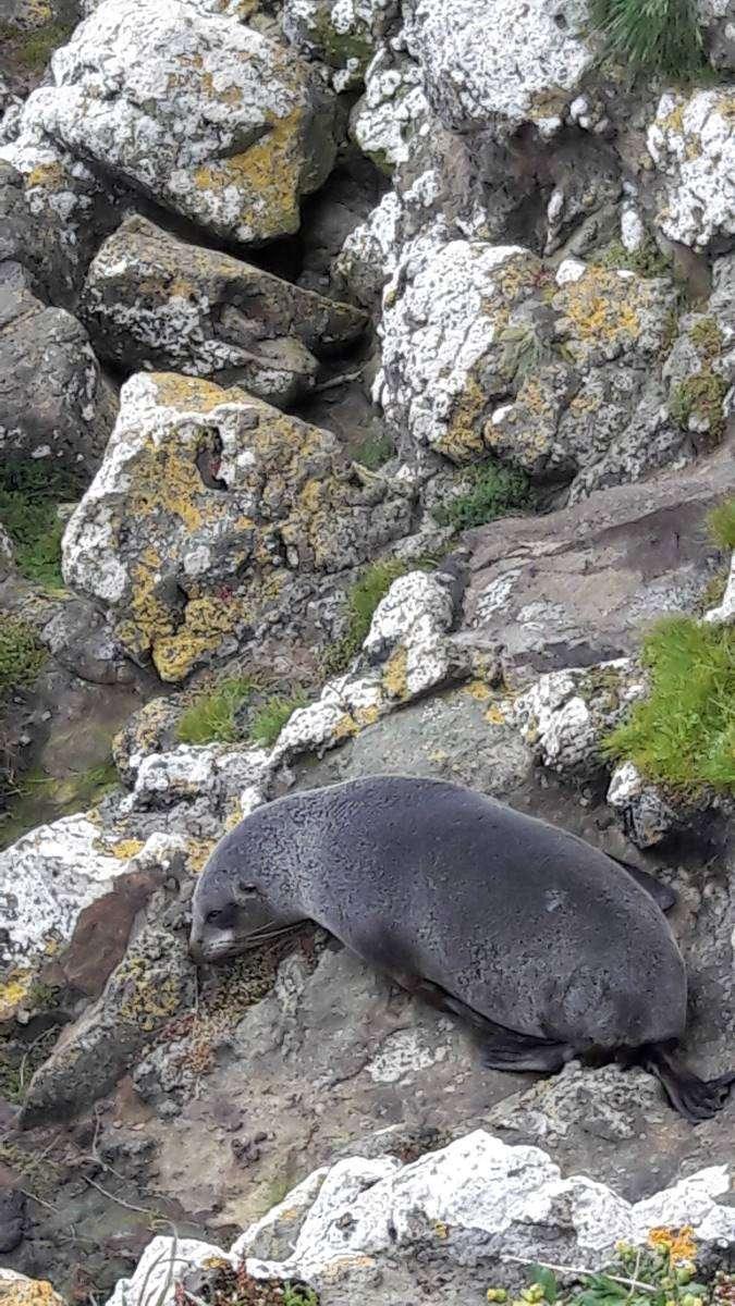 Viaggio in Nuova Zelanda leone di mare
