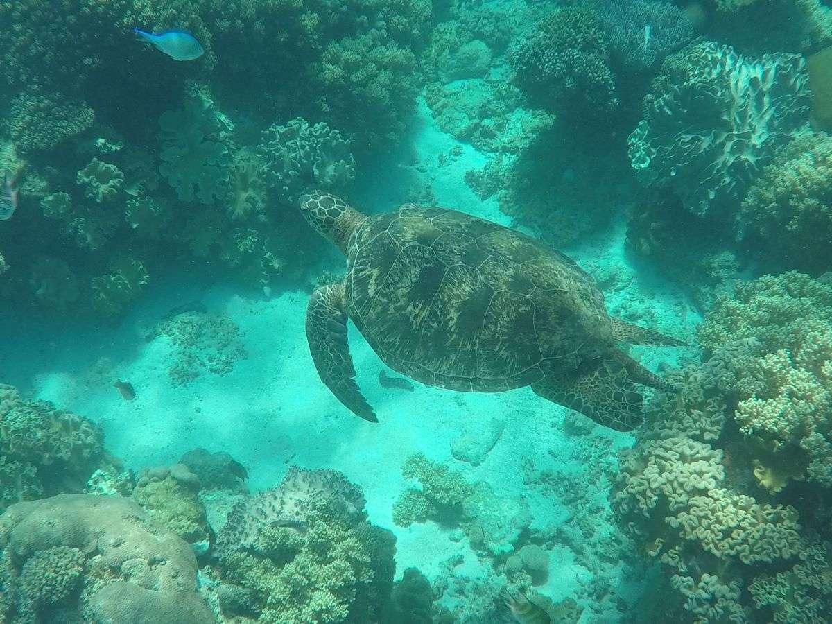 Viaggio nelle Filippine Apo Island