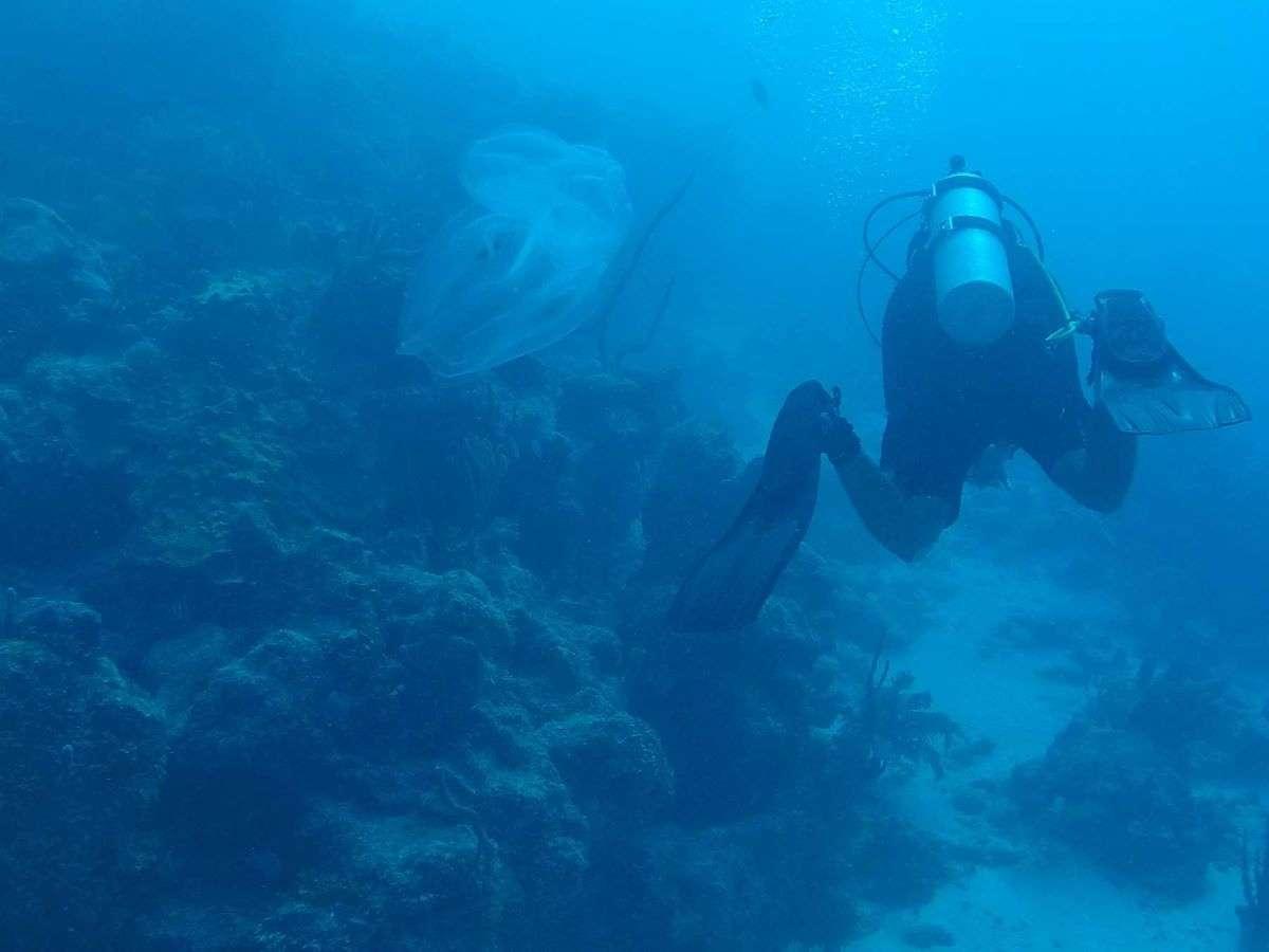 Diving a Banco Chinchorro